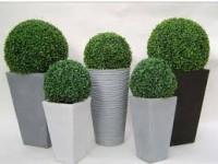 Para sua casa - Buchinha Arbusto para Jardins - Buchinha Arbusto para Jardins