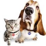 Só Pet Coleiraria Fábrica de Coleiras Personalizadas Finas para Cães e Gatos