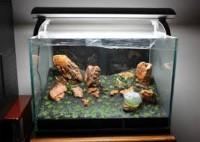 Animais - Aquário montado Para peixes capacide 32 Litros - Aquário montado Para peixes capacide 32 Litros