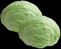 Alimentação - Repolho verde - Repolho verde