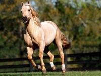 Ração para Cavalo laminada Royal Horse 30kg