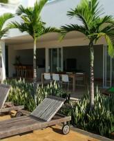 Palmeira Elegans