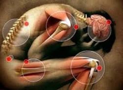 Saúde e beleza - Anti inflamatórios naturais - Anti inflamatórios naturais