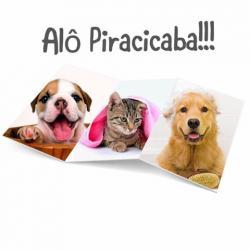 Animais - Agende um banho e ganhe uma hidratação ou tosa higiênica - Agende um banho e ganhe uma hidratação ou tosa higiênica