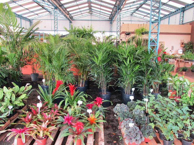 Plantas para interiores de casas plantas de sombra for Plantas ideales para interiores