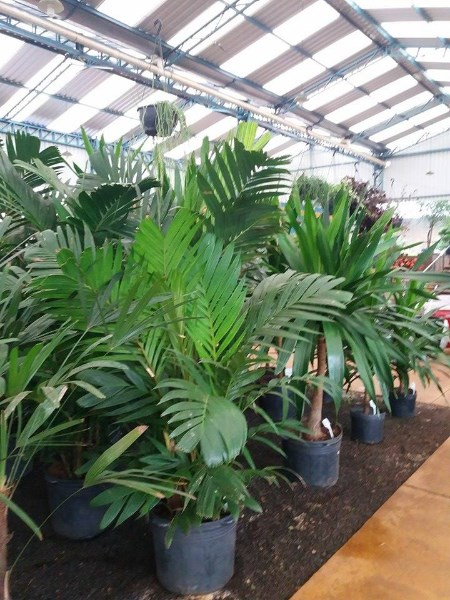 Plantas para interiores de casas plantas de sombra for Plantas para dentro de casa sombra