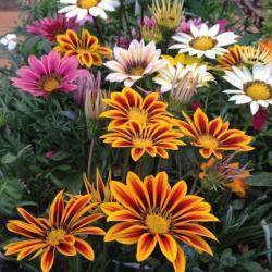 Flores em geral